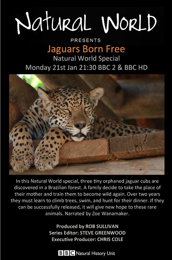 Subscene - Bbc Natural World Special Jaguars Born Free arabisk Undertekst-2774