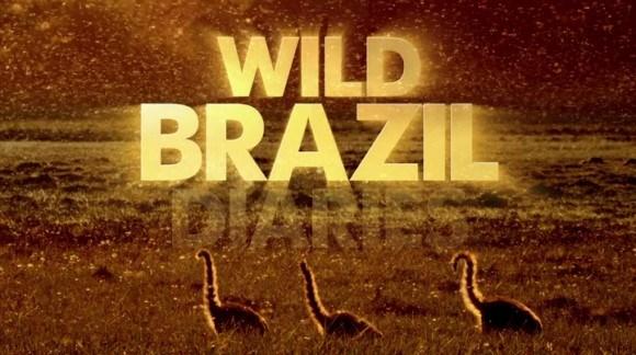 BBC Wild Brazil